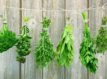 18687395 - variety of fresh aromatic herbs hanging in bunches in front of a wooden wall