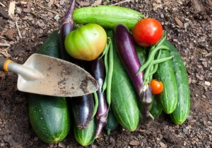 A bounty of freshly picked homegrown garden vegetables
